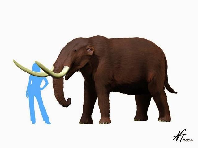 Mammut or Mastodon