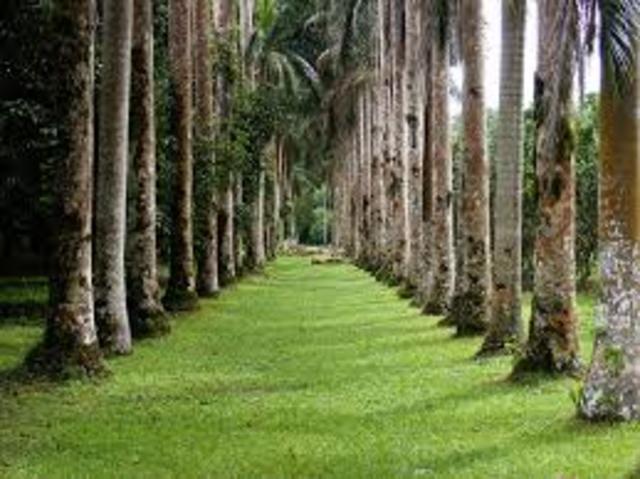 Extencion del parque Botanico