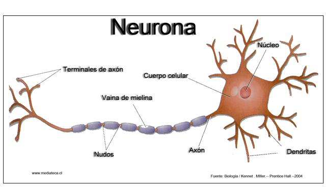 Nobel por descripción de la Neurona