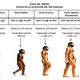 Linea del tiempo evolución del hombre