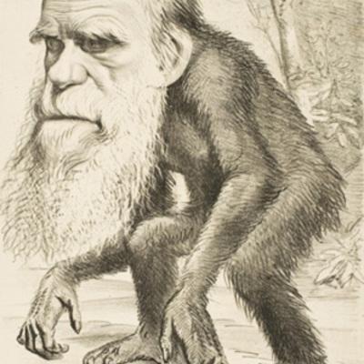 EL ORIGEN DEL HOMBRE: SU EVOLUCIÓN timeline