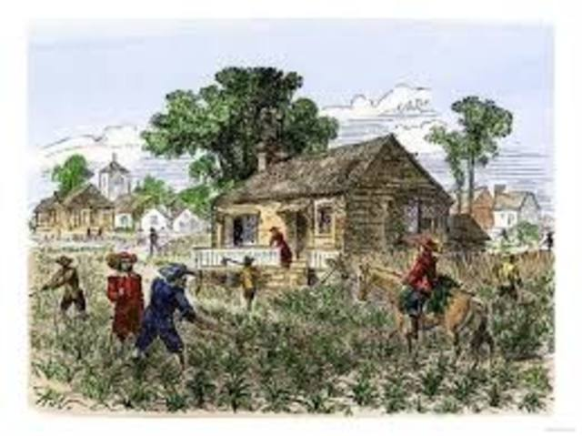 Colonial Economies (Lower South)