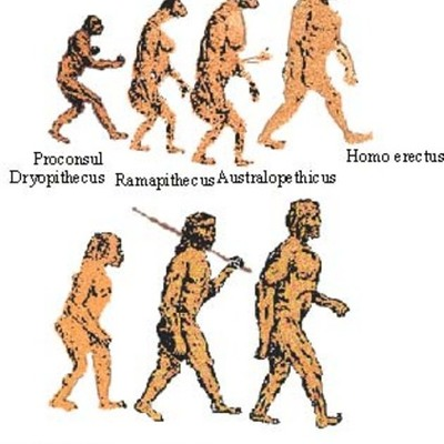 Early Human Evolution timeline