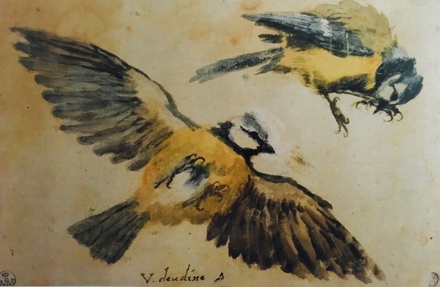 Giovanni da Udine, uccelli
