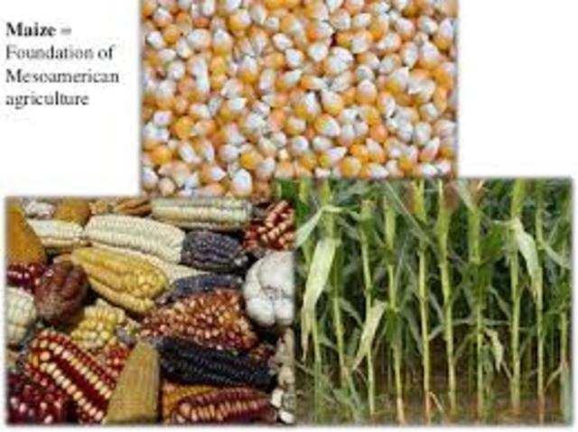 Mesoamerica: Beginning of New World Agriculture