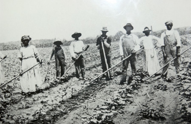 The New South: Sharecroppers