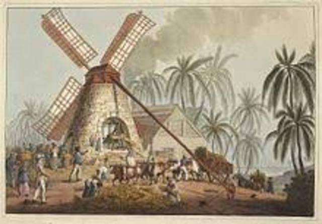 Caribbean Colonies: Sugars