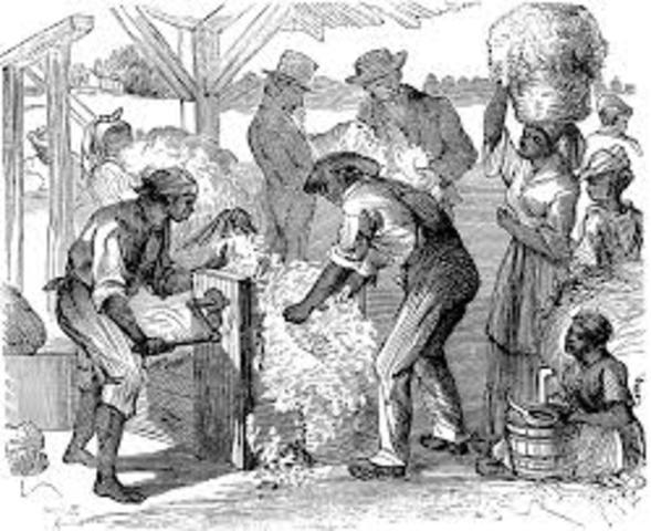 Slavery: Cotton Gin