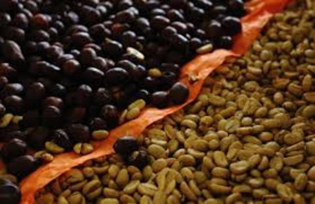 Declive de la producción cafetalera en Brasil
