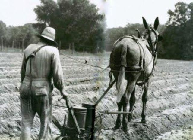 Former Slaves: 40 acres a mule