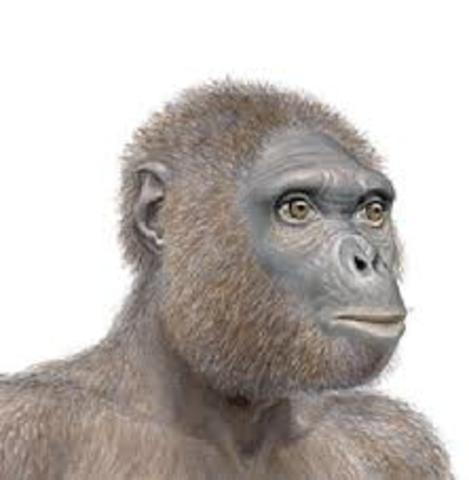 ARDIPITHECUS(Hace 6-5 millones de años)