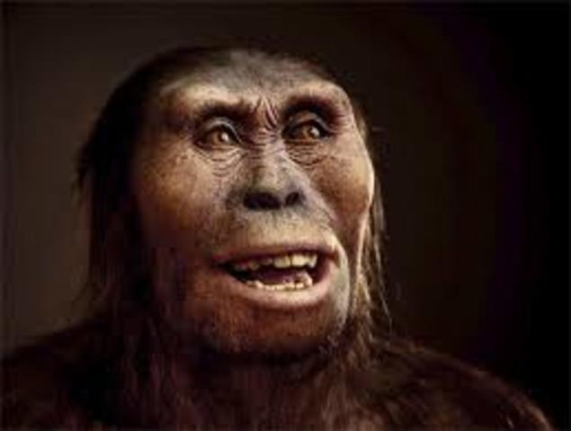 Australopithecus(2.6 millones de años)