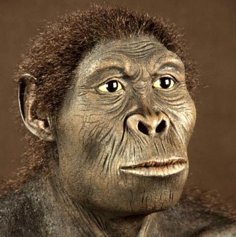 Homo habilis(2 a 1.6 millones de años)