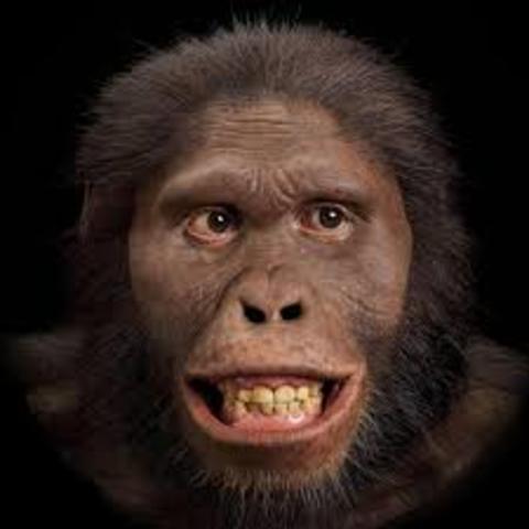 Australopithecus(Hace 3 millones de años)