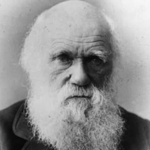 Darwin - Teoría Evolusionista