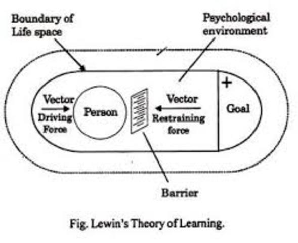 Kurt Lewin - Kognitív tanulás