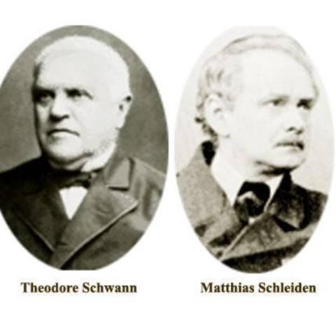 M. Schleiden y T. Schwann