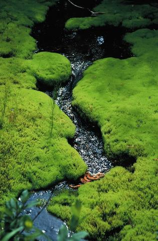 Flat land with stream
