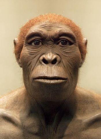 Homo Rudolfensis (entre 1,9 y 1,6 m.a)