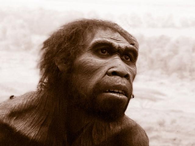 Homo Ergaster (hace 1,75-1 m.a)