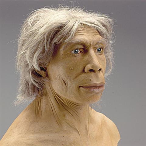 Homo neanderthalensis (hace 200.000 años)