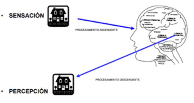Procesos de sensación y percepción