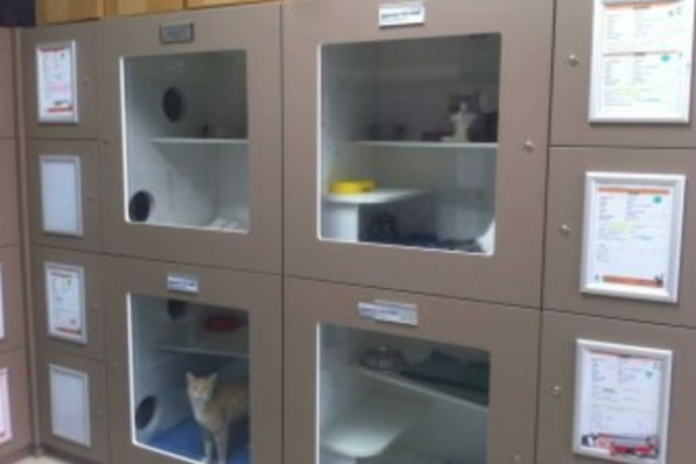 Cat Haven ~ Success! 25% drop in impounds
