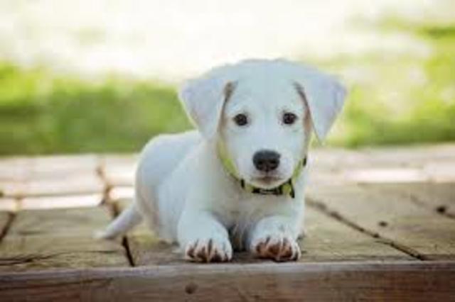 Pierson Gets a Dog