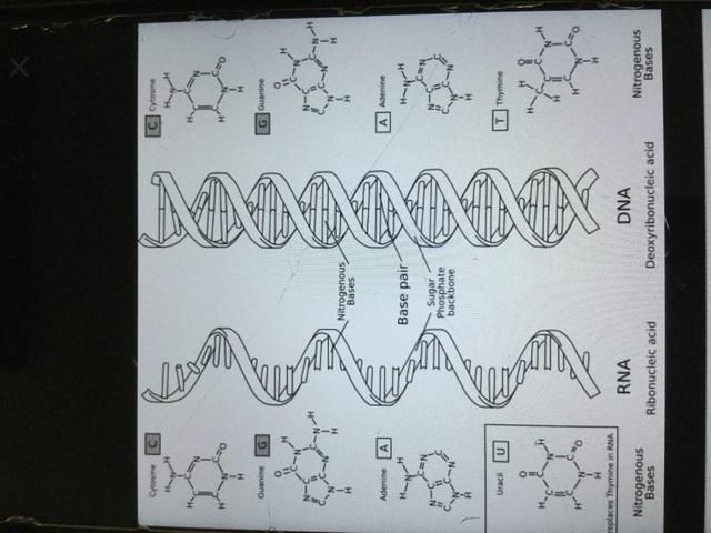 Síntesi de l'ARN primitiu