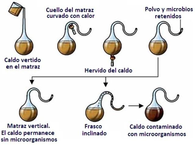 Demostració de Pasteur