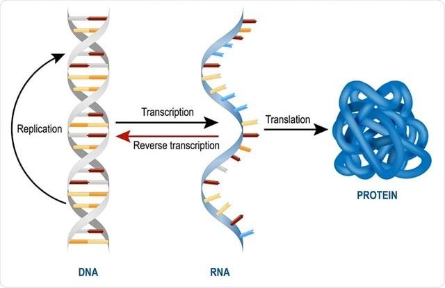 Teoria ARN primitiu