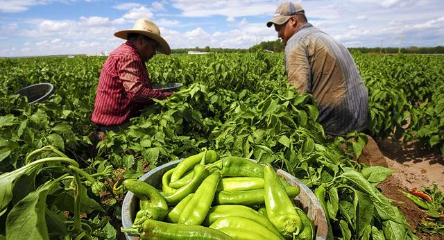 COLOMBIA: Decreto 3190 de 1982 - Programa de Complementación Alimentaria y Desarrollo Económico y Social