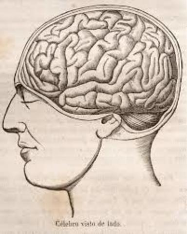 Relación entre la capacidad intelectual y volumen
