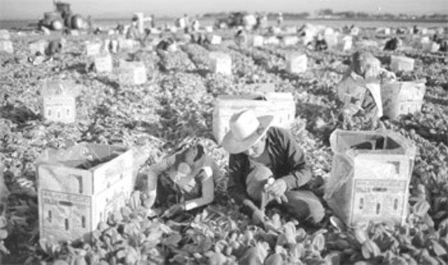 En 1950, el gobierno mexicano instrumentó un conjunto de programas que buscaban hacer frente a las principales causas que se encontraban detrás de esos niveles excesivos de pobreza y desigualdad.