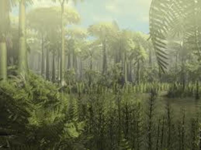 Hakkasid tekkima vihmametsad