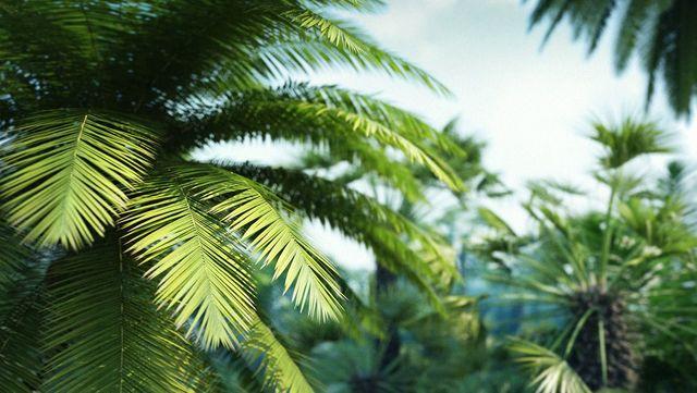 Palmid ja kaktused