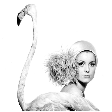 Portrait de Catherine Deneuve - David BAILEY