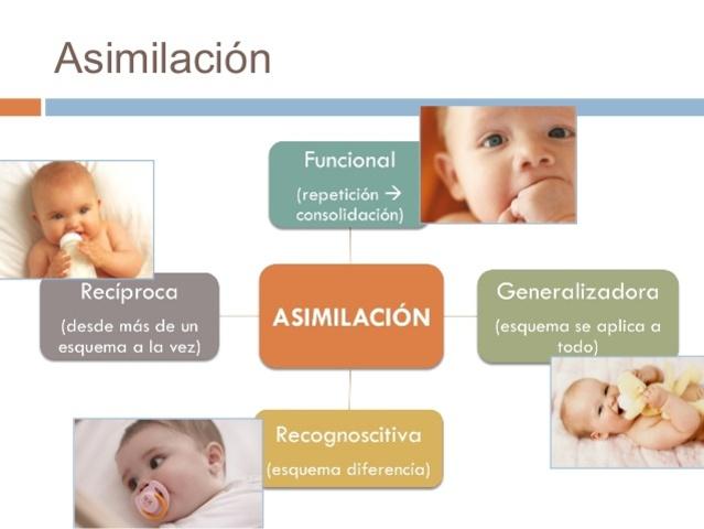 La Asimilacion.