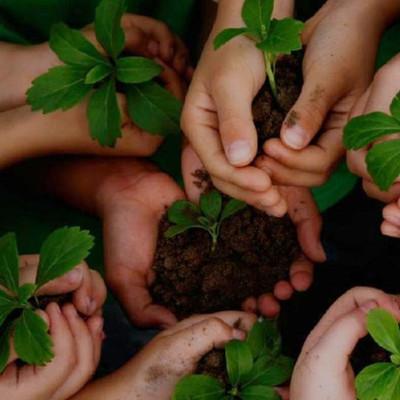 Fundamentos y principios de la educación ambiental timeline