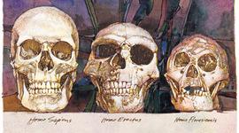 Línia evolutiva dels homínids timeline