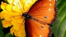 A Butterfly's Life timeline