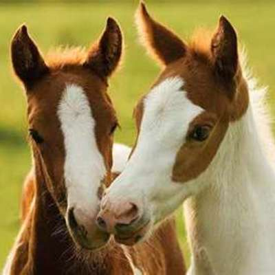 History Of Horses timeline