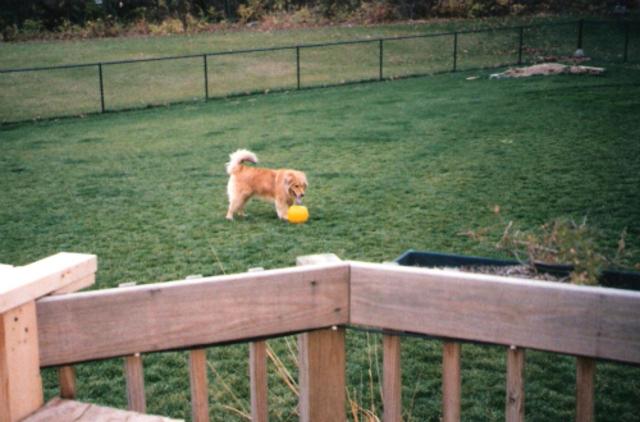 Hace doce años que compré mi perro, Chance.
