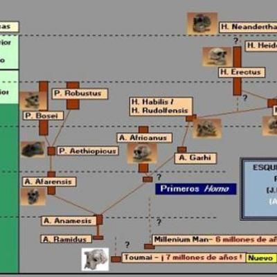EVOLUCIÓ DE L'HOME timeline
