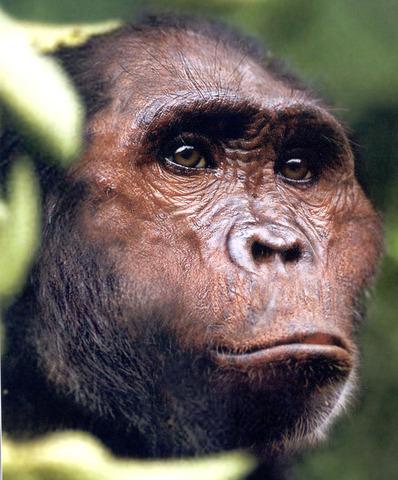A. GARHI (Fa uns 2 milions i mig d'anys)