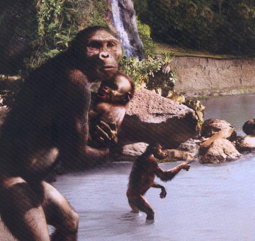 Autralopithecus Garhi