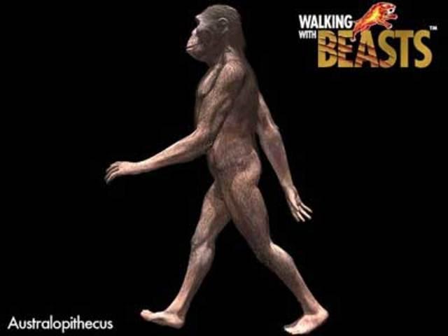 Australopithecus 3.3 -1.8 million BCE