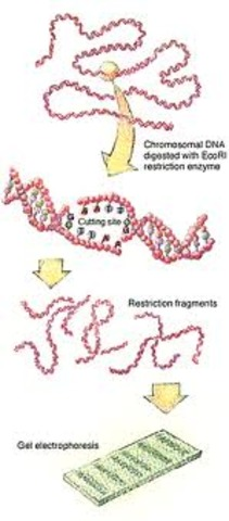 More Bacterial Enzymes