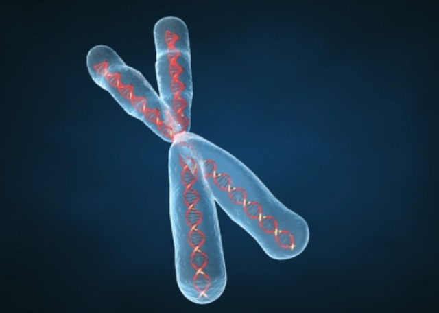 Discovered genes are chromosomes