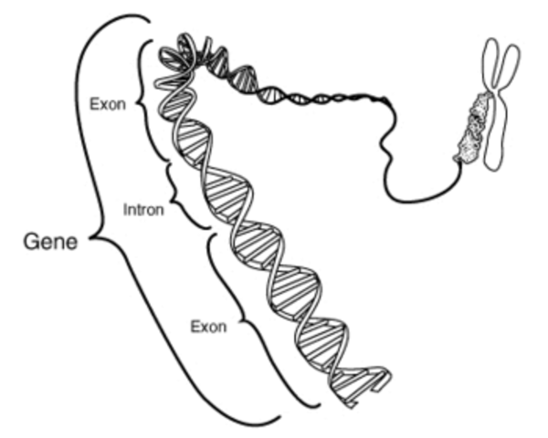 One gene produces one enzyme hypothesis